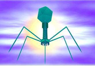 Frequency Bacterio phage